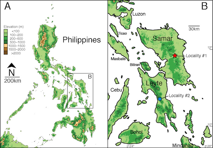 The Waray Dwarf Burrowing Snake was collected on the Philippine islands of Samar and Leyte. Credit: Weinell, et al.