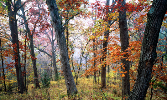KU Field Station's Baldwin Woods Forest Preserve doubles in size