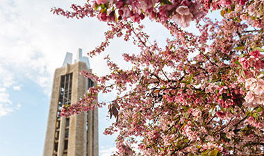 Campanile framed by tree with spring blossoms