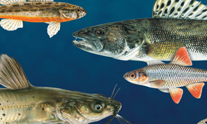 New Kansas Fishes book a resource for scientists, naturalists, anglers