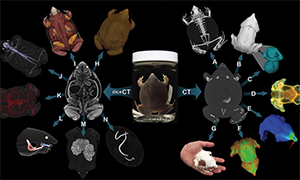Project to give public access to high-resolution 3-D models of vertebrate anatomy
