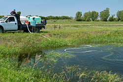 Kansas Biological Survey researchers probe causes of harmful algal