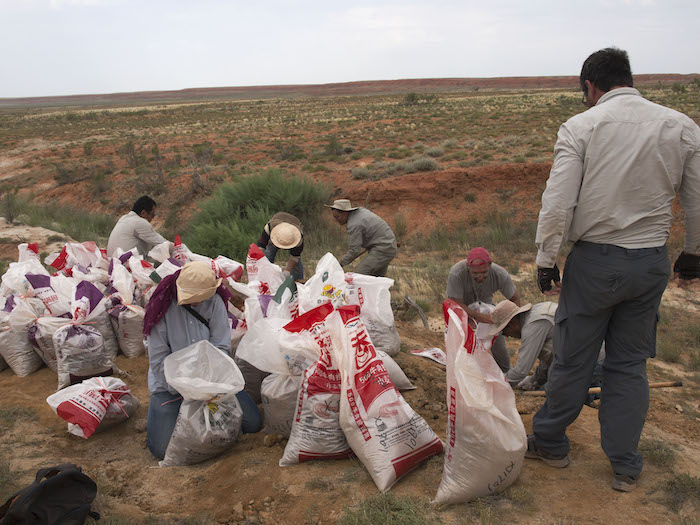 Researchersbagging up sediment for screenwashing at the Junggar Basin field site.