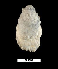 Researcher: Vast loss of marine mollusk habitat may come ...